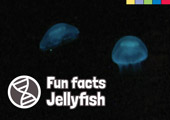 Fun Facts: Jellyfish [Book Cover]