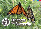 Fun Facts: The Butterfly [Book Cover]
